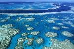 Australia Great Barrier Reef FleeAmerica